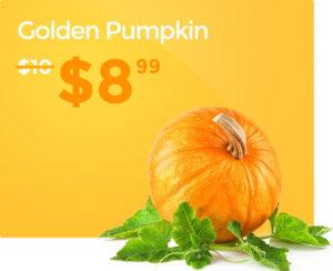 pumpkin 6 1