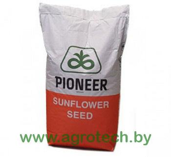 Pioneer podsolnechnick meshok