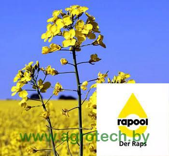 Raps logo 01